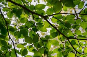 Lövträd är särskilt avstressande, enligt forskning. Foto: pixabay.com